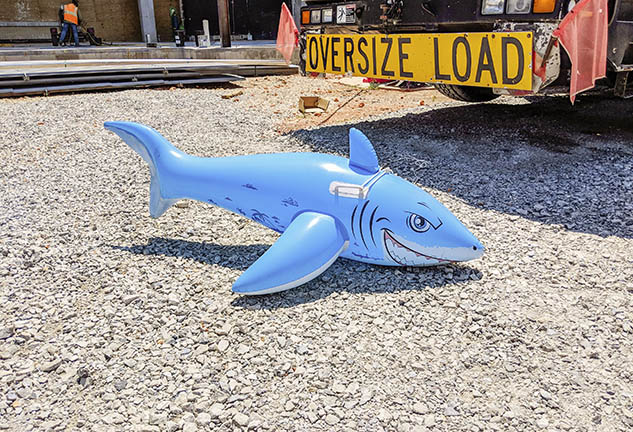 Blow Up Shark
